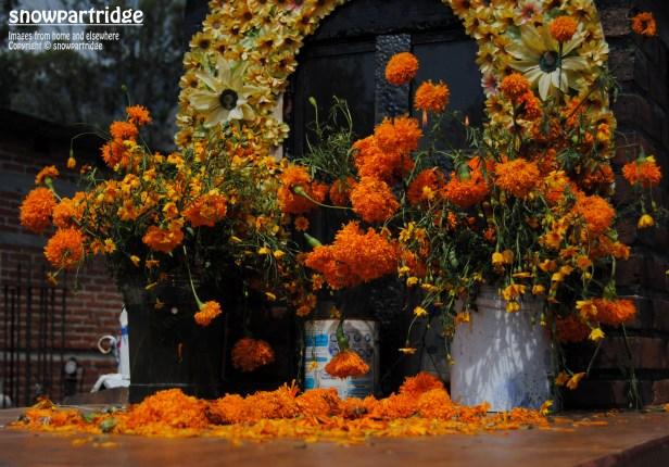 Sea of Marigolds