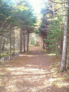 Don't let this starting point in the Fundy Trail fool you. The Fundy Foot Path is not for the faint of heart.
