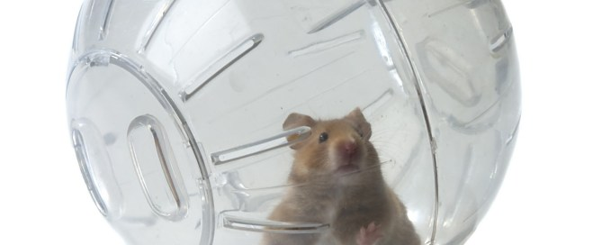 zorb-death-zorbing-hamster-ball