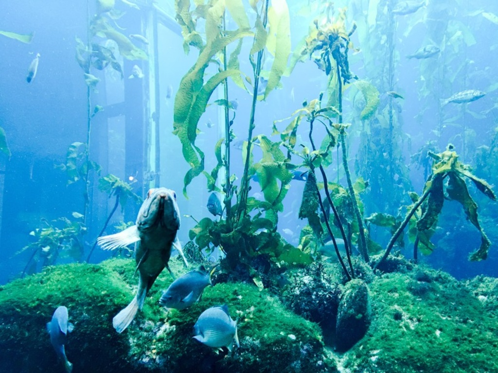 monterey-bay-aquarium-is-such-a-great-place-for-children