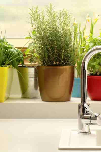 Potted herbs in kitchen windowstill