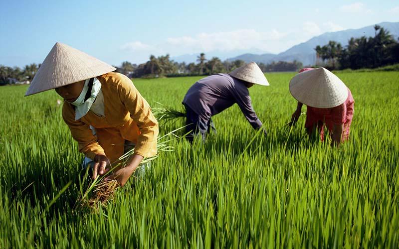 7 món quà lưu niệm cho khách nước ngoài đậm chất Việt Nam