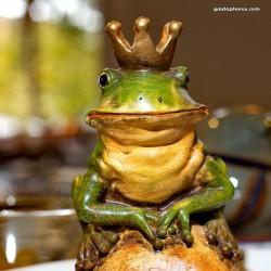 Frosch, Froschkönig, König