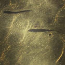 Fischlein in der Adria