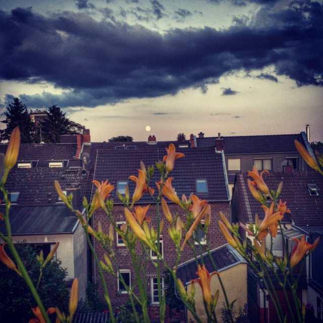 Neues aus Balkonien www.gaidaphotos.com @gaidaphotos