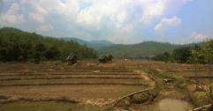 Ausgetrocktnete Reisfelder