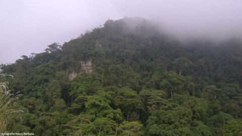chicaque 9