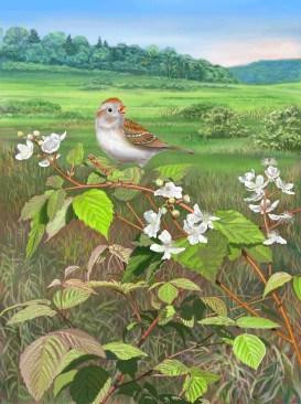 Field Sparrow on Blackberry Cane