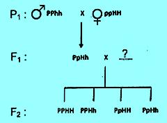 diagram persilangan