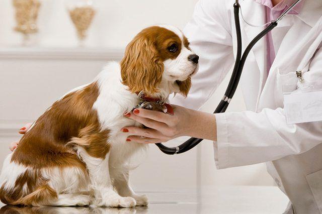 개는 수의사에게 듣습니다