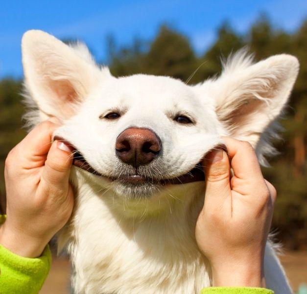 лучшие фото животные улыбаются охоты