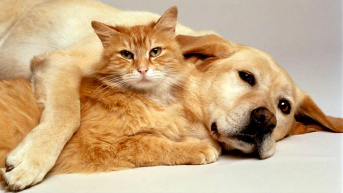 cara berteman kucing dengan anjing foto