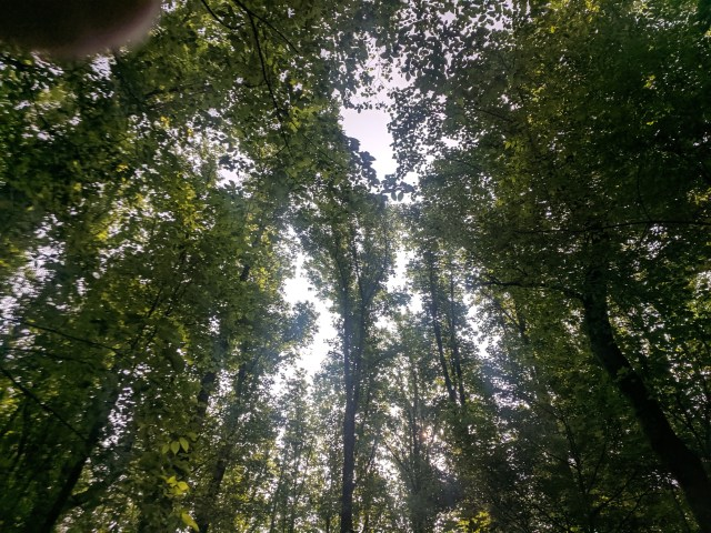 Tree Canopy 100 Feet or More Above the Forest Floor