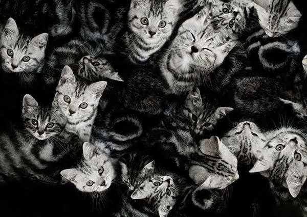 Новогодние кошки!