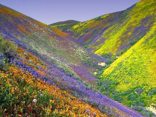 Краски земли