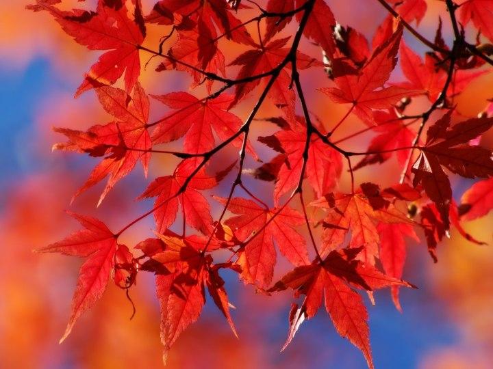 Осень — это вторая весна, когда каждый лист — цветок.