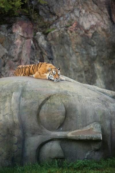 Сон Будды