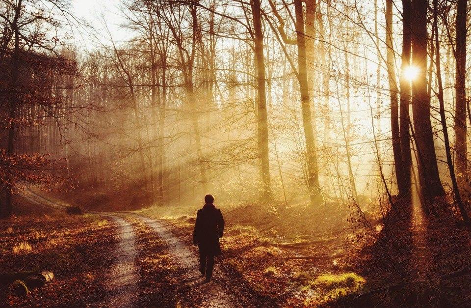 Прогулка в осеннем лесу