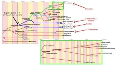 homo-sapiens-alimentacion-genealogia