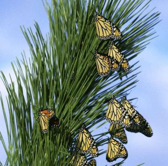 Long Beach El Dorado Nature Center Butterfly