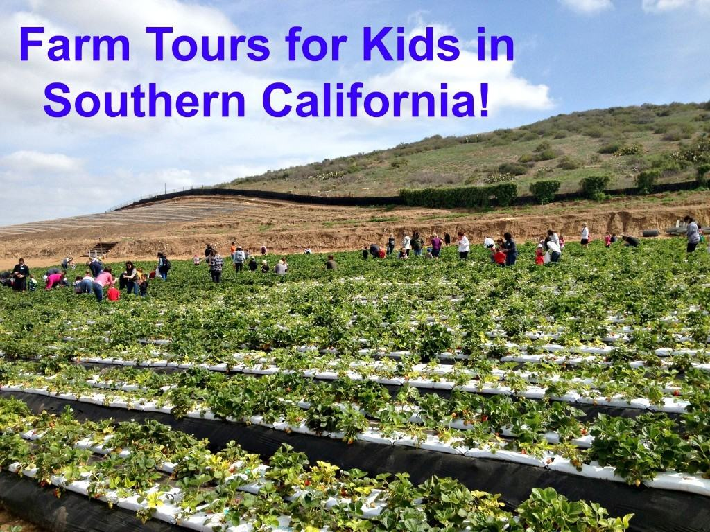 Farm Tours For Kids In Southern California