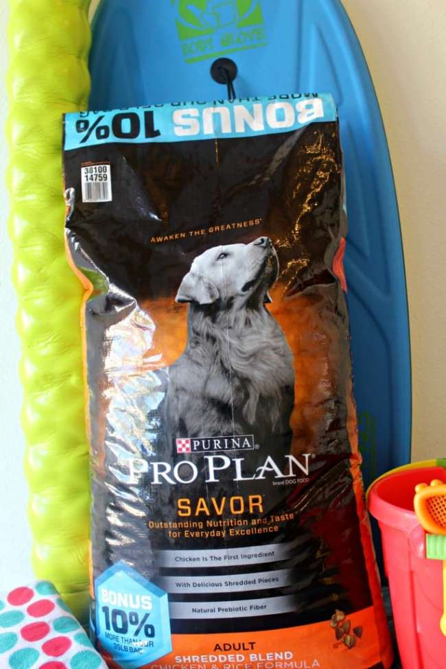 Top 5 items to put in a doggy beach bag