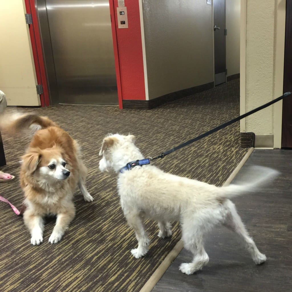 Are you planning a pet friendly vacation? Check out Extended Stay America where pets are always welcome guests. Extended Stay America is an economy, extended-stay hotel chain consisting of 629 properties in the United States and Canada. They offer discounts and special offers for pet owners just like you!