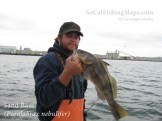 Sand bass before release back into San Diego Bay.