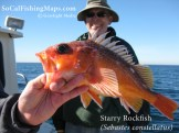 A starry rockfish from the North County coast, San Diego, CA.