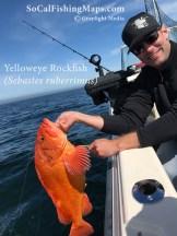 A nice yelloweye rockfish before release out of Depoe Bay, Oregon.