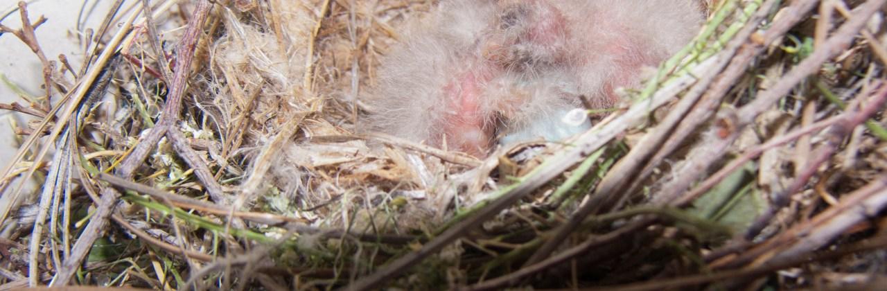 Wordless Wednesday: Birdie Update