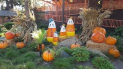 Candy Corn family outing
