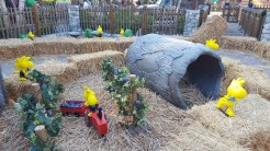 Woodstock farming for boysenberries