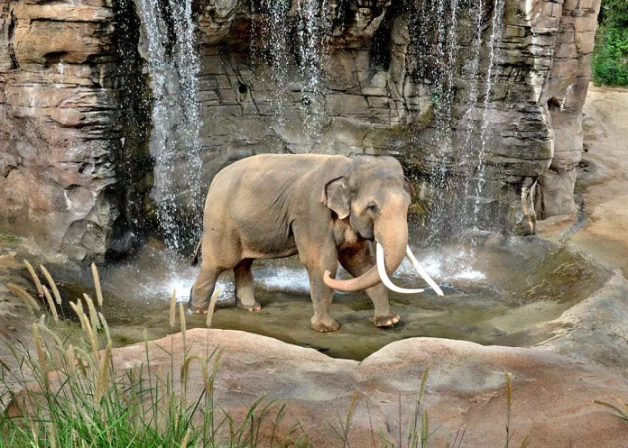 LA Zoo Celebrates World Elephant Day