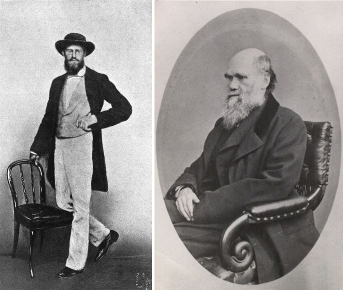 Left: Photograph of Alfred Russel Wallace, taken in Singapore, 1862. Kilde: Marchant, James (1916) Alfred Russel Wallace — Letters and Reminiscences, Vol. 1. Public Domain. Right: A photograph of Charles Darwin from 1867 by Ernest Edwards (1837-1903). Kilde: http://darwin-online.org.uk/ Public Domain