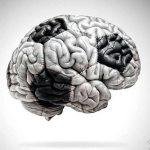 Soccer Brain