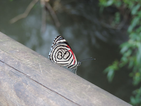 Des « mariposas » (papillons) de toutes couleurs viennent se poser sur les rampes bordant le chemin