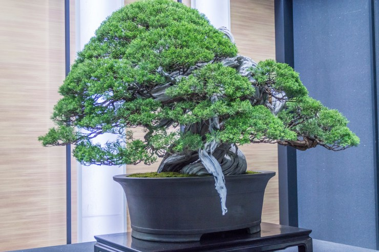 The 8th World Bonsai Convention 1