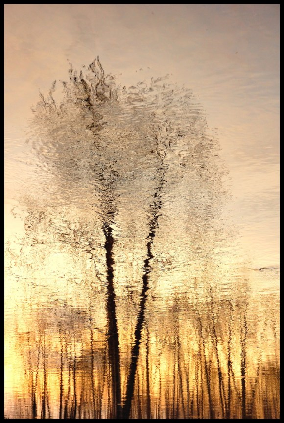 reflexion_trees