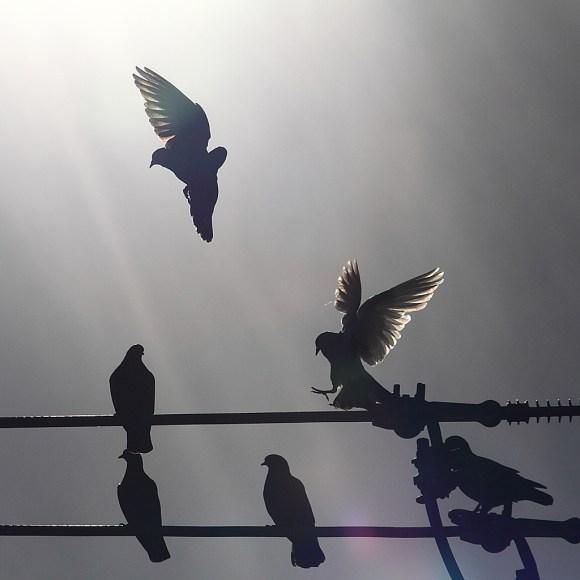 light_doves