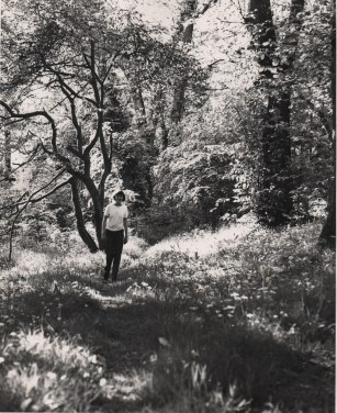 Dappled Woodland Photo: Frank Tubridy