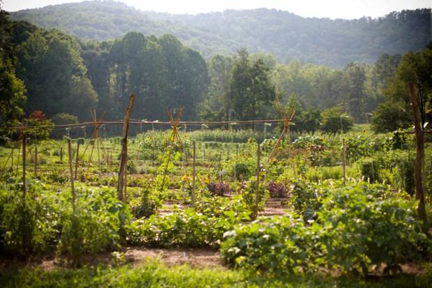 the-gardens-at-blackberry-farm-support-fresh-seasonal-fare