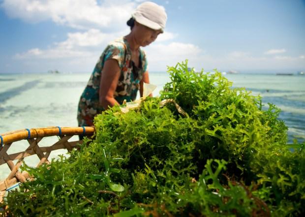 Seaweed-the-next-Superfood