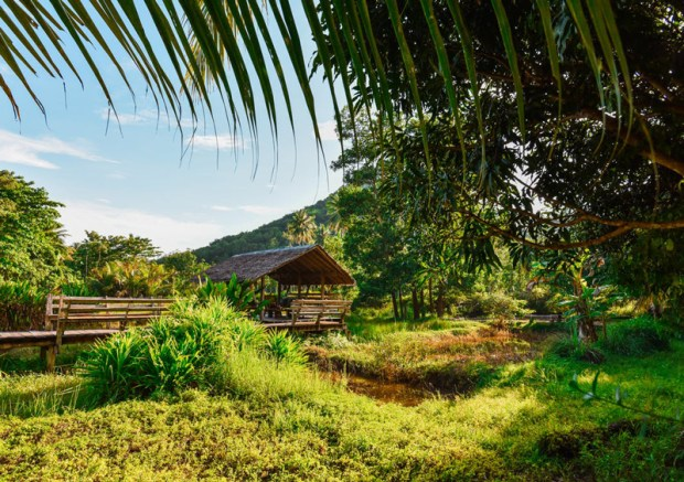 nature-trees-hut-green-hawaii