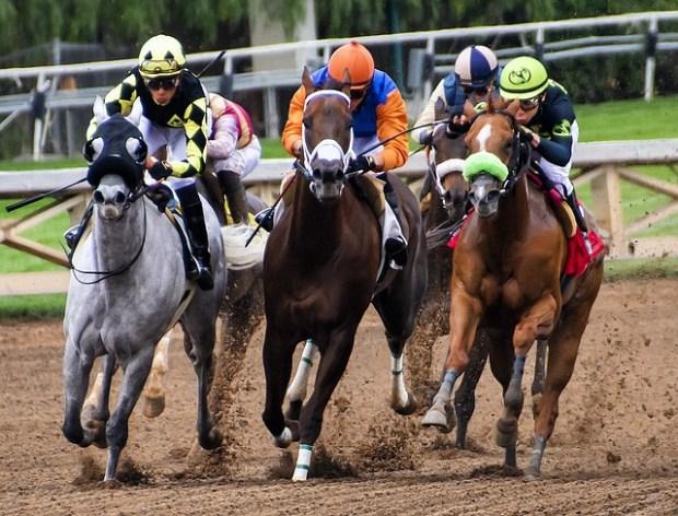 horses-3811270_640 (1)