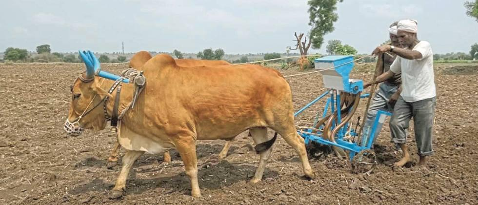 Accelerate rabi sowing in Pune district