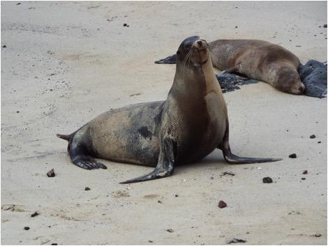 Dec. 2019 Seals 2