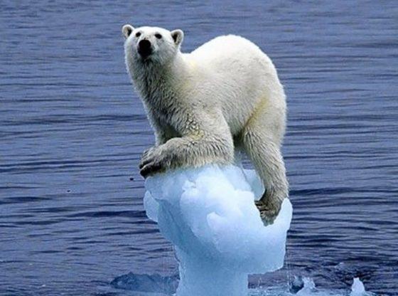 Feb. 2020 Bear ice