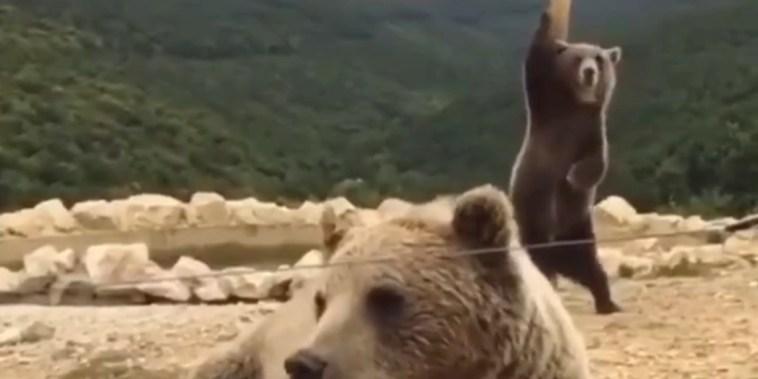 Sexy Bear Dance