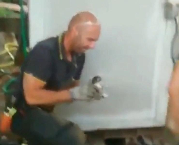 Italian firefighter rescues the tiniest kitten